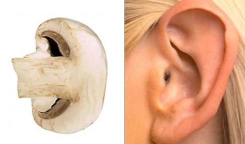 Slikovni rezultat za voce i povrce kao ljudski organi